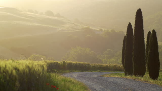 tuscany, wheat field at sunrise, a dirt road and the cypresses - toskana stock-videos und b-roll-filmmaterial