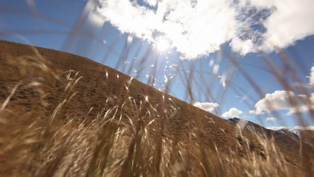tussock grasses wave in a breeze on a hillside in new zealand. - otago region stock videos & royalty-free footage
