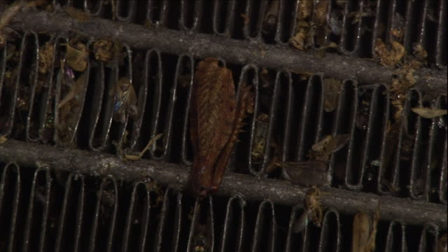 vidéos et rushes de tweezers pluck an insect from a metal grate. - pince chirurgicale