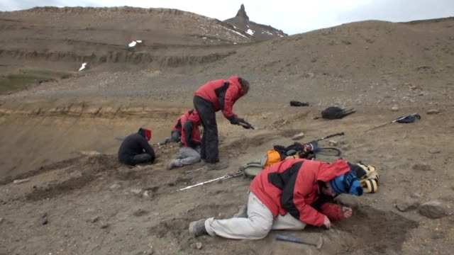 twenty scientists are working at one of the largest dinosaur fossil excavation sites discovered seven years ago in chilean patagonia where at least... - four animals stock videos & royalty-free footage
