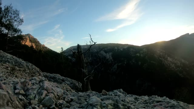 twig and mountain - twig stock videos & royalty-free footage