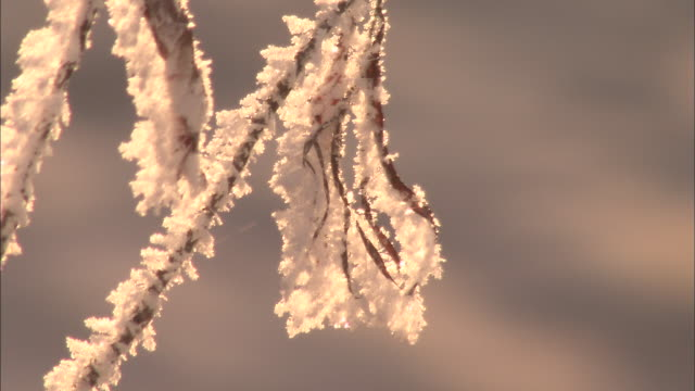 twig covered in hoar frost hangs with sunlight glistening on water in background - twig stock videos & royalty-free footage