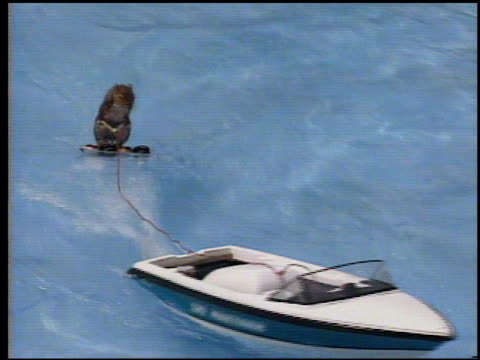 / twiggy the waterskiing squirrel is the goodwill ambassador for the us open waterski championships / woman holding squirrel wearing a purple cowboy... - waterskiing stock videos & royalty-free footage