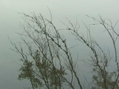 vidéos et rushes de twigs de l'eau - arbre à feuilles caduques
