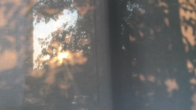 vídeos de stock e filmes b-roll de twilight sun set through tree leaf and window shade building - com sombra