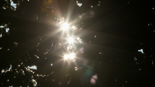 twinkling sunlight through trees - generic location stock videos & royalty-free footage