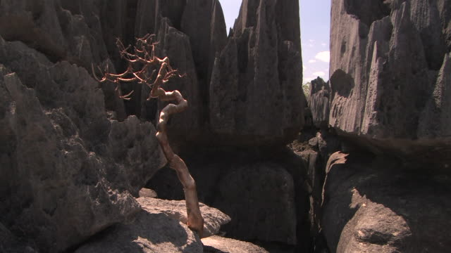 stockvideo's en b-roll-footage met ms, twisted dead tree on limestone rock formations, tsingy de bemarha national park, madagascar - sedimentary rock