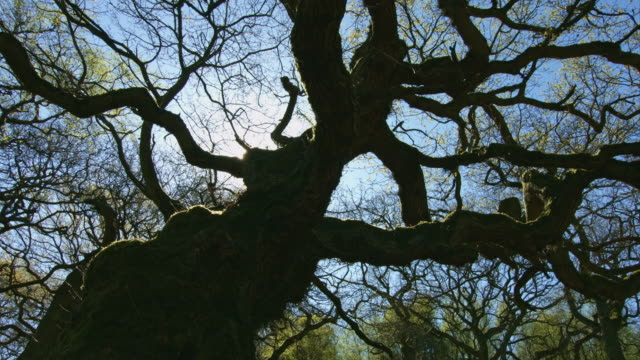 twisted tree - durham england stock-videos und b-roll-filmmaterial