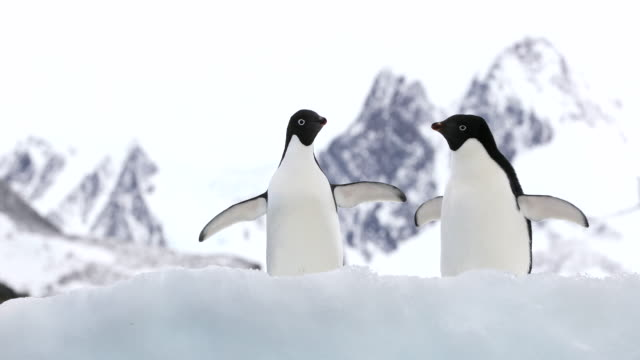 Two Adelie Penguins with Mountains behind