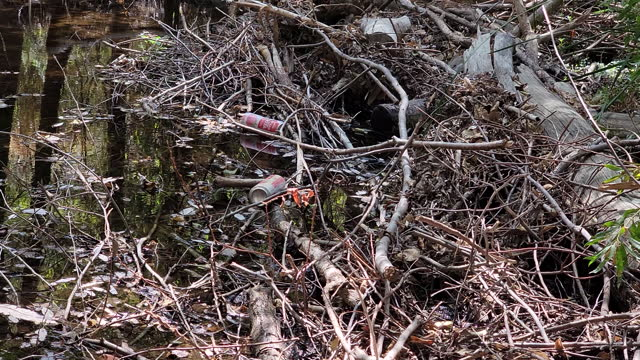 two aluminium cans discarded on the banks of the big tujunga creek in the angeles national forest, los angeles county on september 1, 2021. - remote control stock videos & royalty-free footage