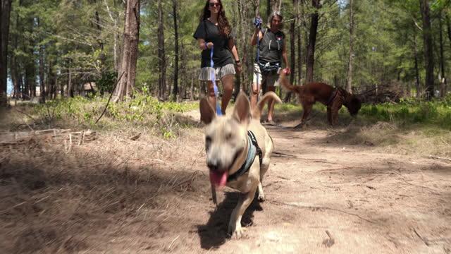 två amputerade hundar och ägare på skogspromenad - sällskapsdjur bildbanksvideor och videomaterial från bakom kulisserna