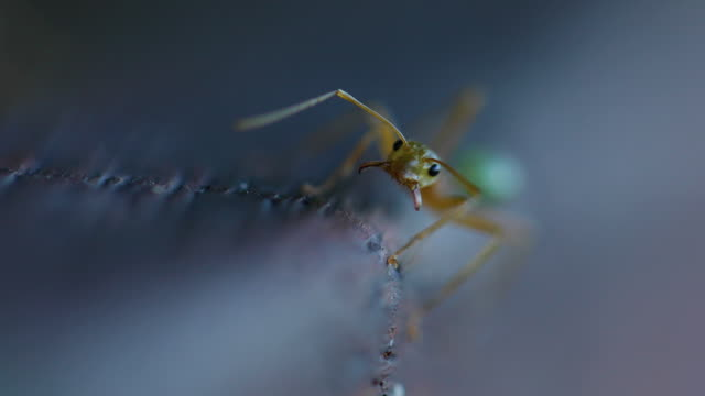 two ants in a macro shot - insect stock videos & royalty-free footage