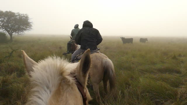 two argentinian gauchos riding horses in the morning with fog and carry on shotguns