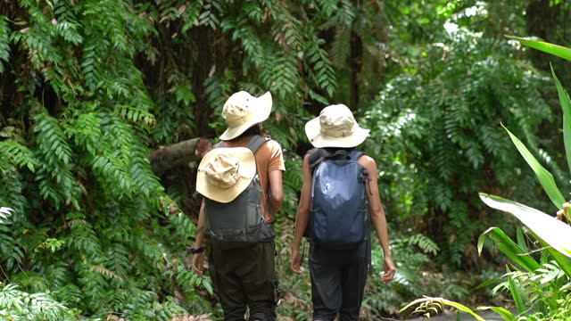 two asian female tourists go on an adventure in the tropical forest. - tropical tree stock videos & royalty-free footage