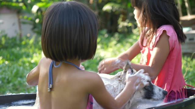 two asian girls cleaning up her toy poodle with water hose and spray - shampoo per capelli video stock e b–roll