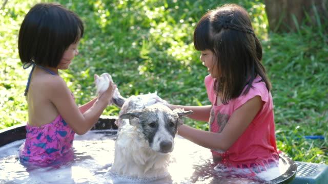 zwei asiatische mädchen aufräumen ihre spielzeug pudel mit wasserschlauch und spray - kinder beim duschen stock-videos und b-roll-filmmaterial