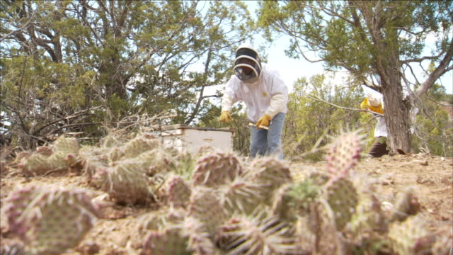 two beekeepers approach a hive in the desert. - research stock videos & royalty-free footage