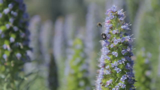 two bees pollenate - 40 seconds or greater stock videos & royalty-free footage