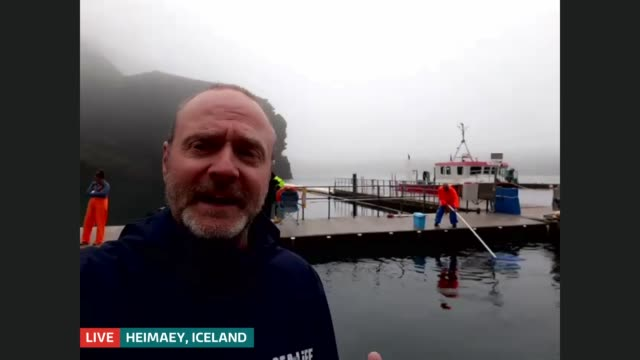 two beluga whales move to world's first open water sanctuary iceland heimaey ext andy bool live 2way interview sot - cetacea video stock e b–roll
