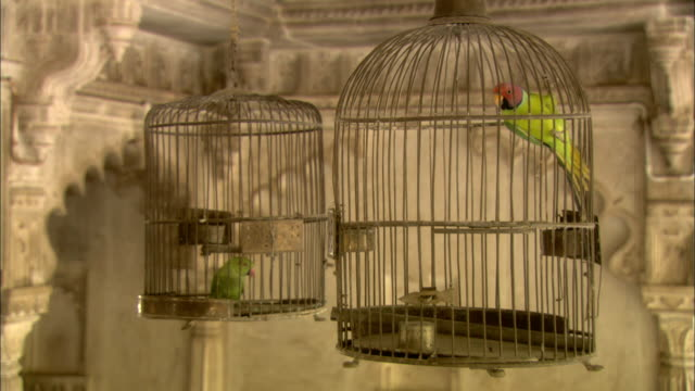 two bird cages containing parrots hang from the ceiling inside the lake palace. - cage stock videos & royalty-free footage
