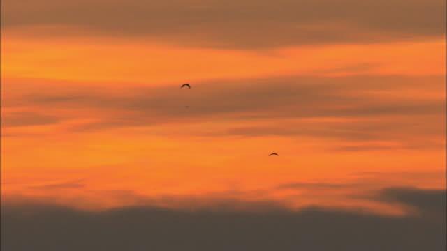 two birds flying across the sunset sky, africa - 2匹点の映像素材/bロール