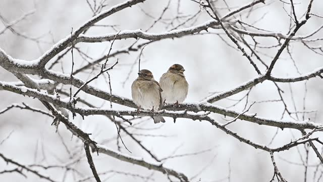 two birds sit on a branch during a snowstorm in central park on february 19, 2021 in new york city. the u.s. national weather service issued a winter... - bird stock videos & royalty-free footage