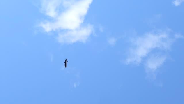 two birds - 2匹点の映像素材/bロール