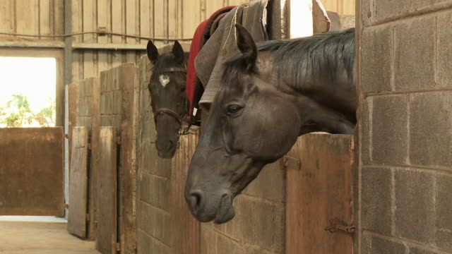 two black horses in stable - bridle stock videos & royalty-free footage