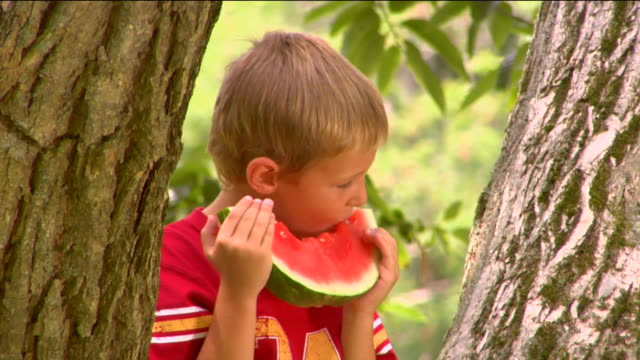 ms td tu two boys eating watermelon, as one sits in tree and another stands next to tree / sherman, ct, usa - next to stock videos and b-roll footage