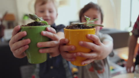 cu two boys (4-5) holding up potted plants / brooklyn, new york city, usa - holding stock videos & royalty-free footage
