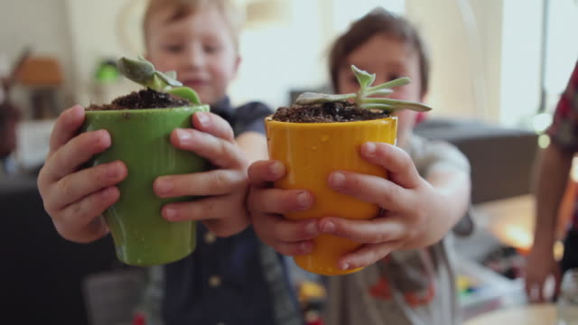 vidéos et rushes de cu two boys (4-5) holding up potted plants / brooklyn, new york city, usa - flore