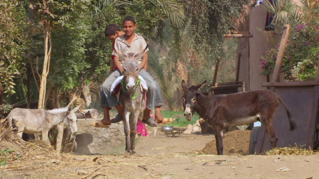 ms ts two boys riding on donkey / egypt - donkey stock videos & royalty-free footage