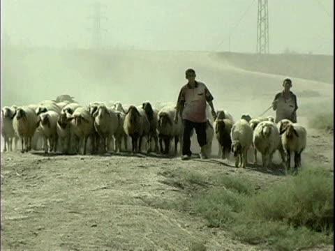 two boys walking with heard of goats on dirt road / arab jabour, iraq / audio - 羊飼いの棒点の映像素材/bロール