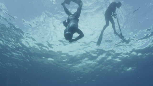 UW two breath hold divers in sea then leave shot, Guadalupe Island, 2012