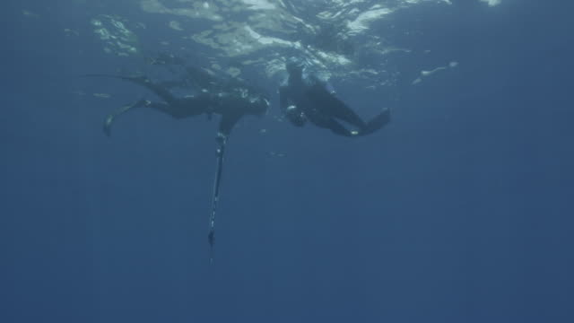uw two breath hold divers one with gun one with camera, guadalupe island, 2012 - arpone video stock e b–roll