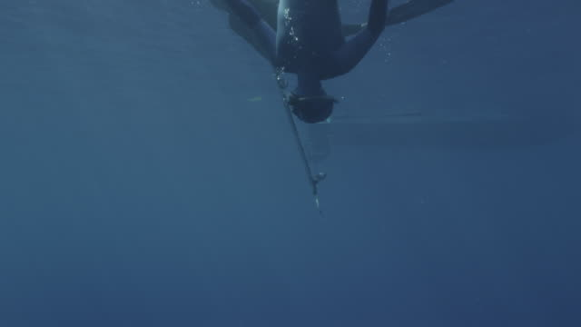 UW two breath hold divers one with gun one with camera. Hull of boat visible, Guadalupe Island, 2012