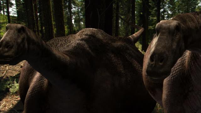 CGI, CU, Two Brontosauruses walking through forest