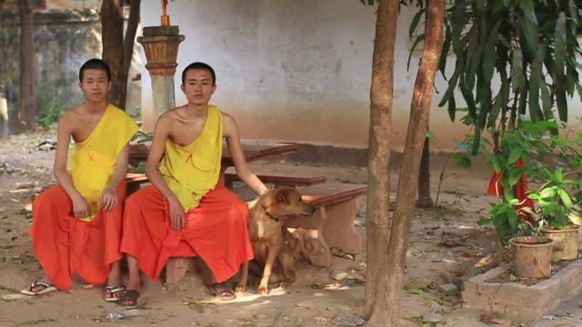 ws slo mo two buddhist monks sitting in yard with dog / vientiane, laos - 僧衣点の映像素材/bロール