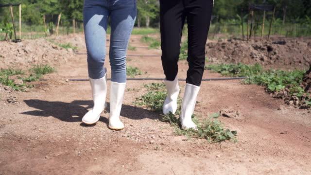 vídeos de stock, filmes e b-roll de womans'feet de dois negócios inspecionando as plantas após havesting duas semanas - pé
