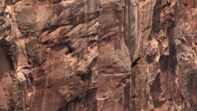 two california condors in grand canyon soar away - california condor stock videos and b-roll footage