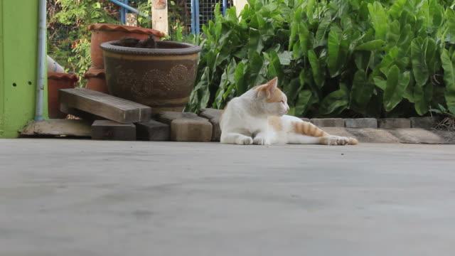 2 つの異なる選手猫に恵まれています。 - コンクリート点の映像素材/bロール