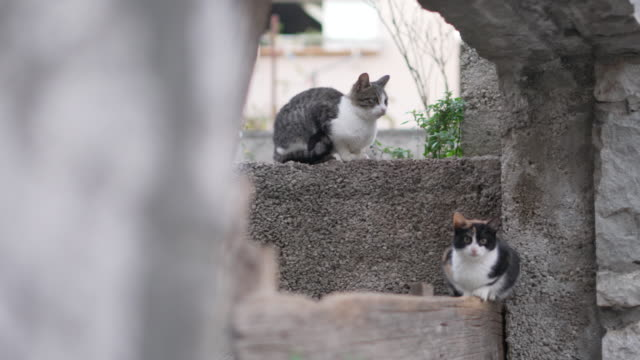 Two cats in Split Croatia Old Town Diocletian's Palace
