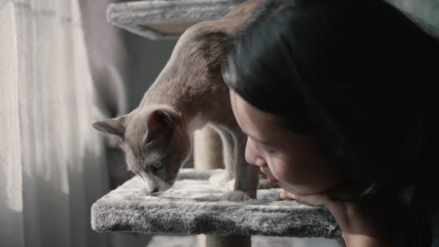 Zwei Katzen spielen auf Katzenturm.