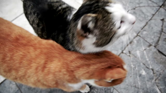 two cats playing - two animals stock videos & royalty-free footage