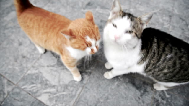 two cats playing - tail stock videos & royalty-free footage