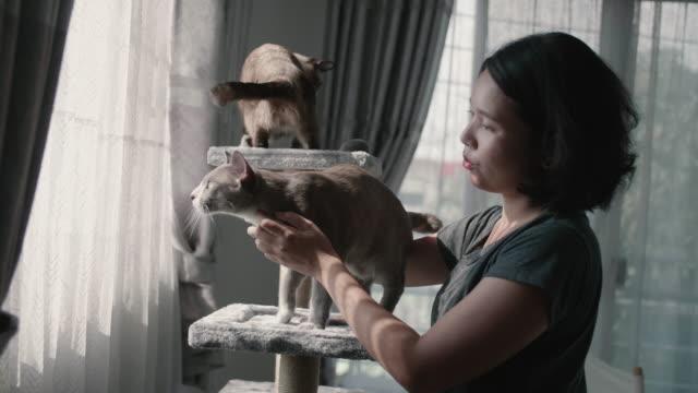 Zwei Katzen spielen mit der asiatischen jungen Frau auf einem Katzenhaus.