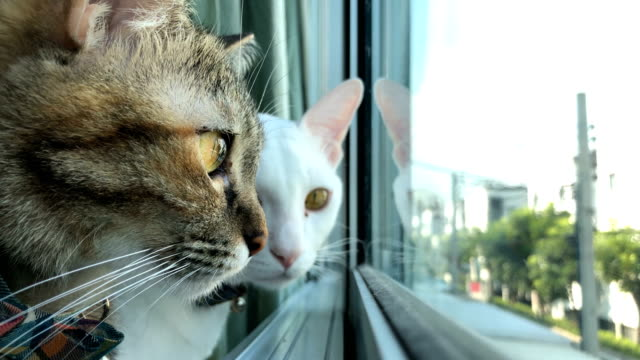 two cats - animal eye stock videos & royalty-free footage