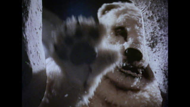 1964 two children hide from an aggressive polar bear - north pole stock videos & royalty-free footage