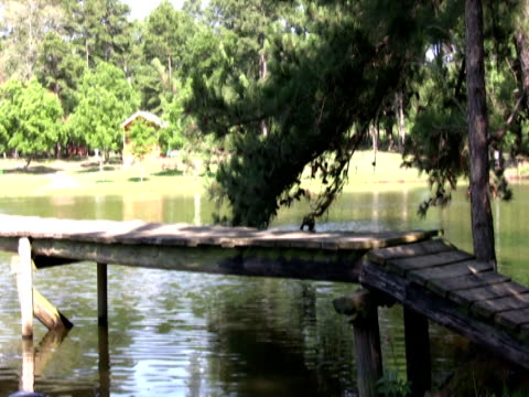 two children jumping off a dock pal - pond stock videos and b-roll footage