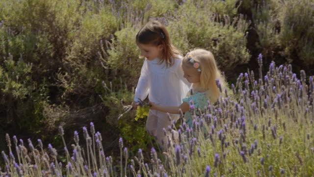 two children walking through lavender flowers - 小学校低学年点の映像素材/bロール
